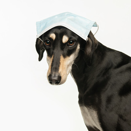 Polly says don't worry, no dogs will be asked to pose in PPE!
