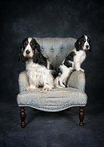 DogFest2015 - 174
