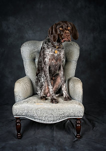 DogFest2015 - 005