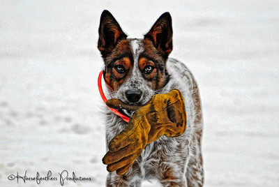 Dogs: edited photos