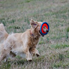 Bowman's novel way of carrying the frisbee