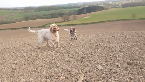 Catchin' dirt or trying to...  Ruben and Woody in the middle of a ploughed field... The footpath crosses it... So we stopped to admire the view