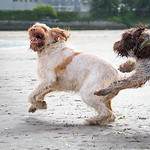 """What's the time Mr Wolf - Woody and Ruben playing chase on the beac <a href=""""http://www.heidiannemorris.com/Galleries/DogsMy"""">http://www.heidiannemorris.com/Galleries/DogsMy</a> Google plus DOG ENCOUNTERS collection is not set to auto follow - you'll need to choose to follow - if you'd like to : <a href=""""https://plus.google.com/collection/UeCXX"""">https://plus.google.com/collection/UeCXX</a>"""