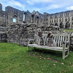 """Italian Spinone """"Alfred and Walter"""" at Rievaulx Abbey"""
