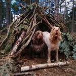 Ruben and Woody #Bushcraft Spinone style! 😁 #blackpark