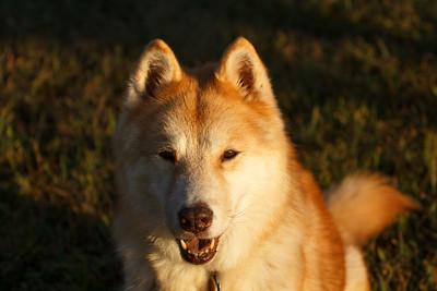 Bay (2000-2014), my stray from Siberia