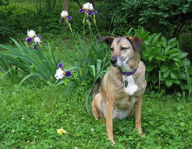 Peg & her irises