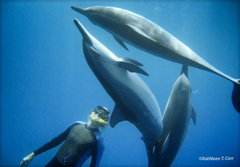 Willy and Dolphins Playing