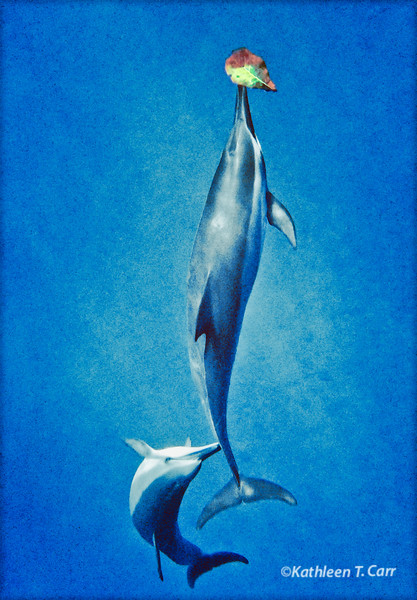 Dolphin Leaf Game