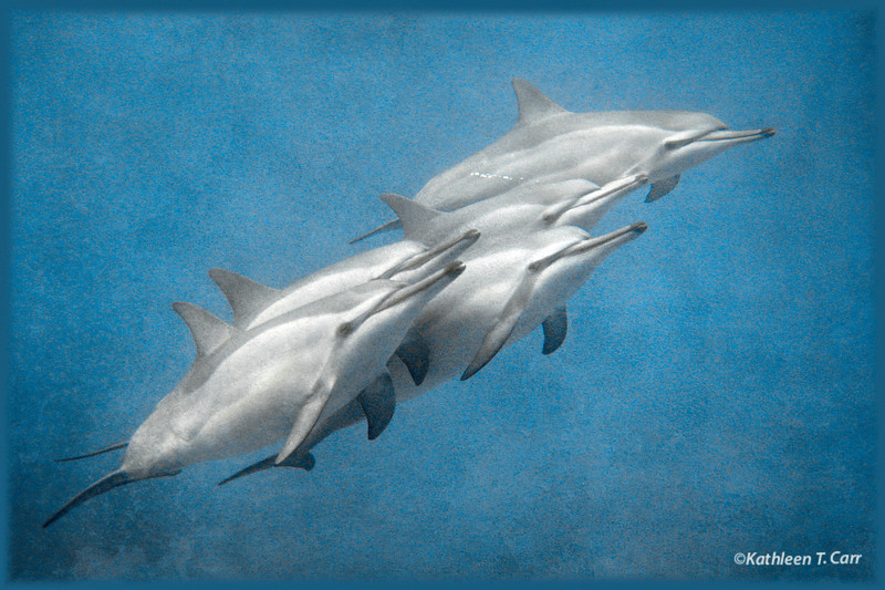 Five Dolphins