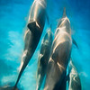 Dreamy Dolphins