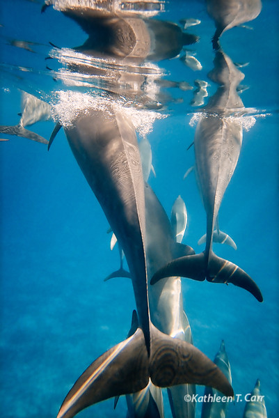Dolphins Breathing