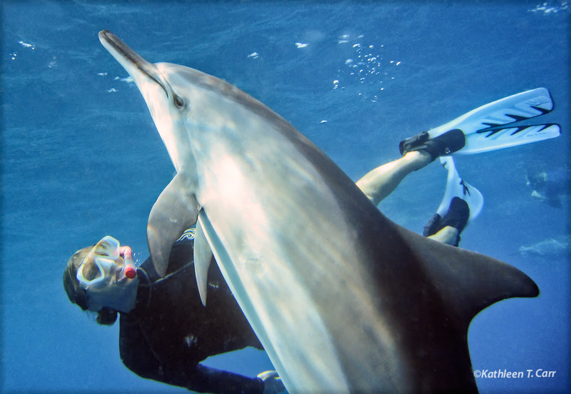 Kathy J. and Dolphin Playing