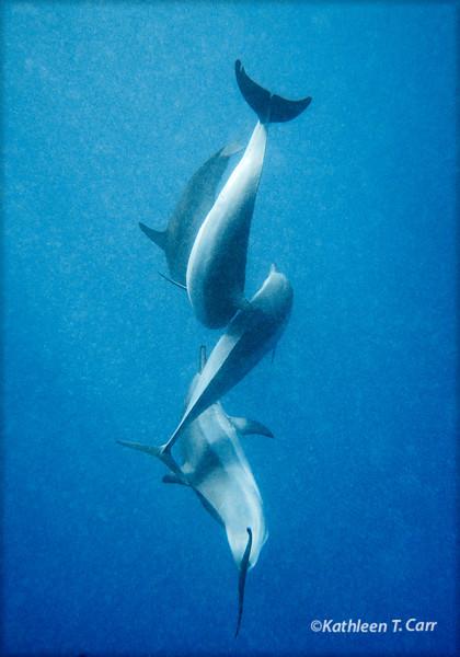 Dolphin Dance II
