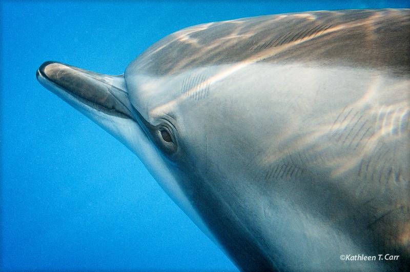 Dolphin Gaze