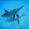 Dolphin Pair #516