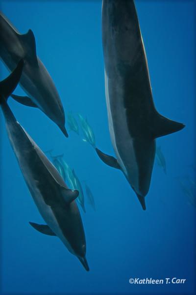 Dolphins Descending