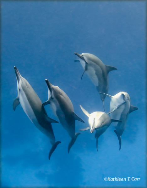 Dolphins Coming Over