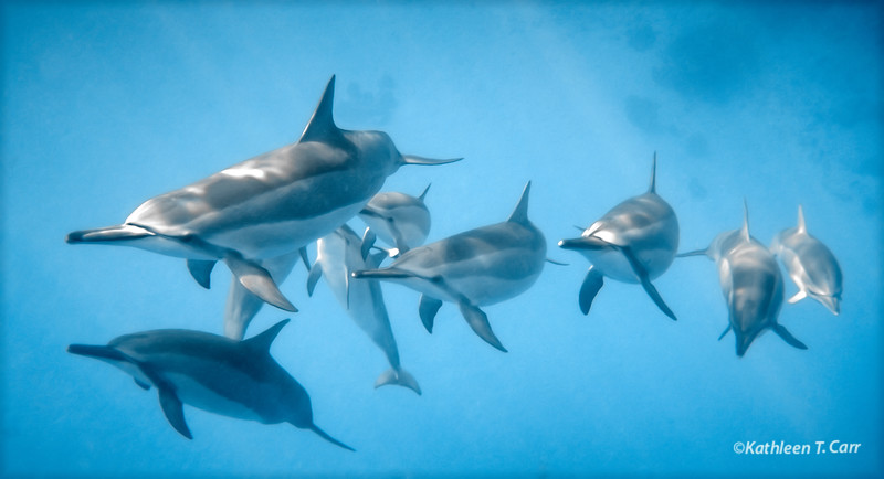 Dolphins Approaching