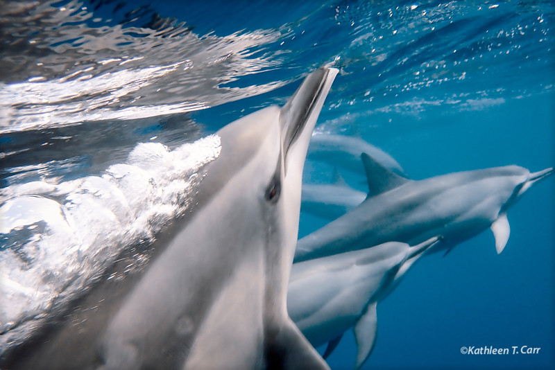 Dolphin Exhaling