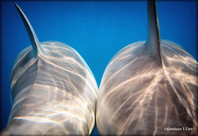 Dolphin Buddies