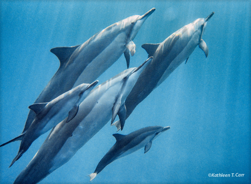 Dolphin Moms and Babies