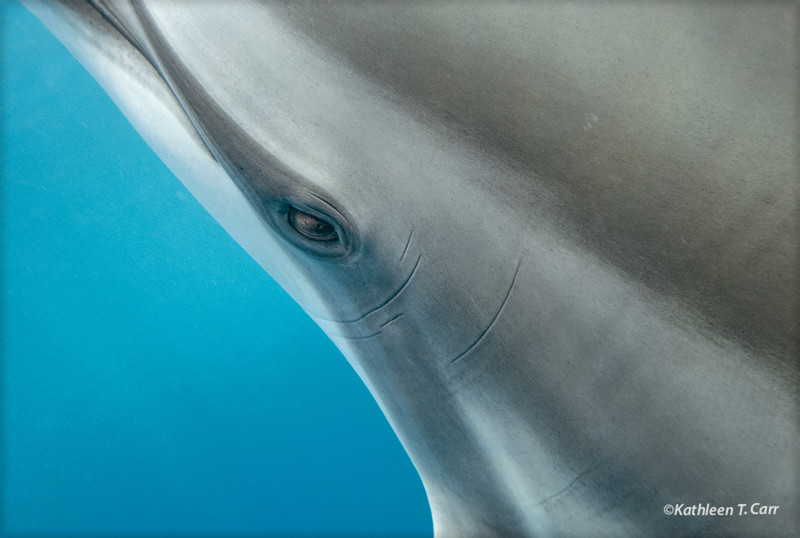 Dolphin Eye Contact