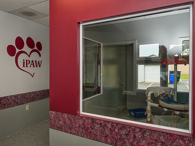 Ipaw_020