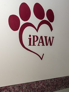 Ipaw_017
