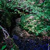 Yards from the springs determined by the U.S. Geological Survey as the origin of the Haw River. N. of Kernersville, NC. ll 4.22.2020