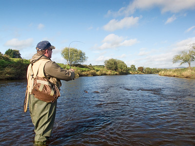 Drumragh River - fly fishing for brown trout on the Drumragh River near Omagh, Co Tyrone, N Ireland