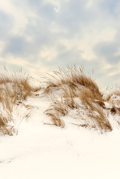 Beach Grass in Winter