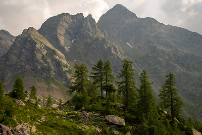 Larch trees stand beneath the mighty face of Pizzo dei Tre Signori in the alps of northern Italy.