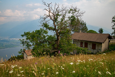 A gnarled tree sits amongst a field of wildflowers above Lake Como in northern Italy.