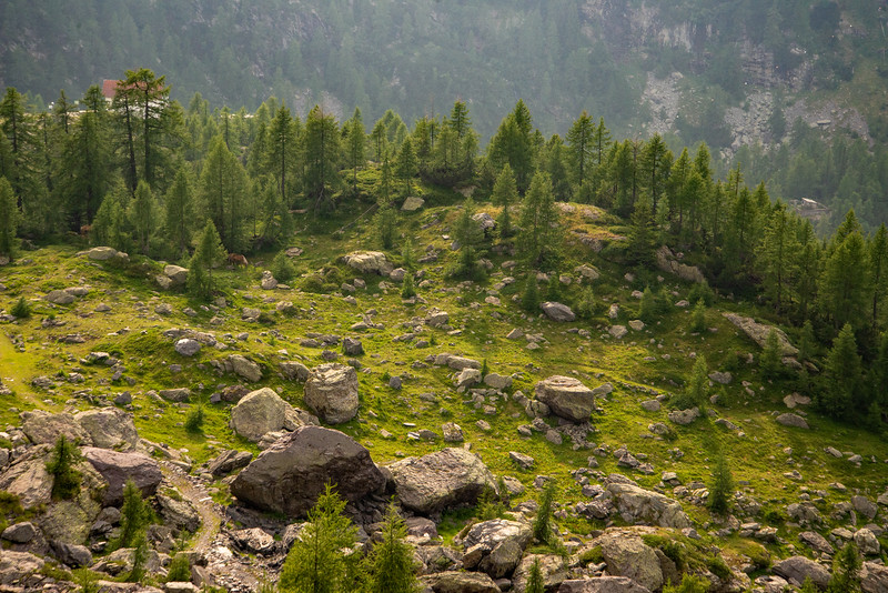 An enchanted mountain meadow high in the Alps of northern Italy.