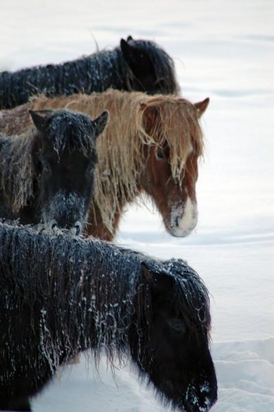 Grundartangi Iceland