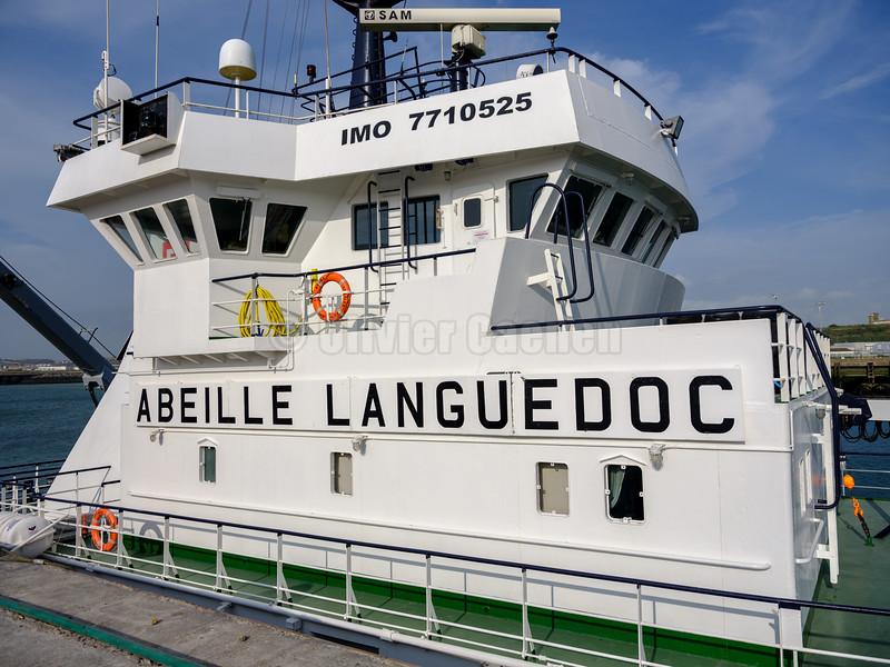 Abeille Languedoc © 2017 Olivier Caenen, tous droits reserves