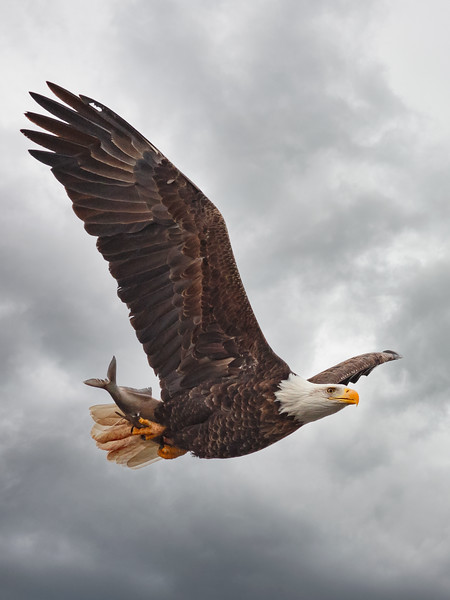 Eagle 2014