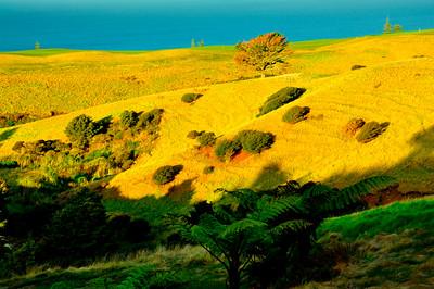 Kauri Cliffs, New Zealand 2010