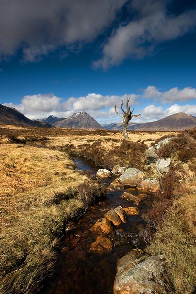 Dead Tree Glencoe. John Chapman.