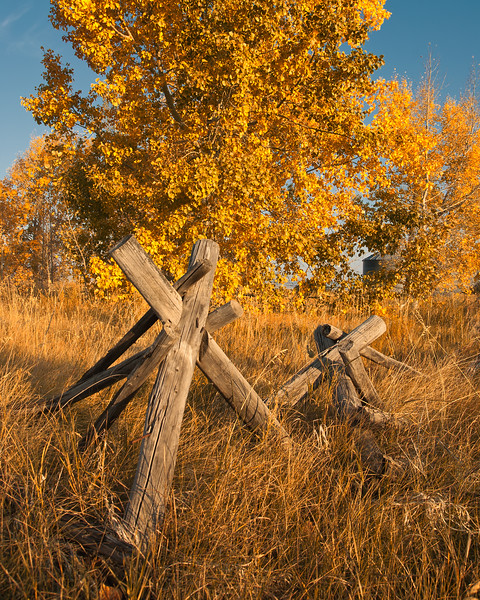 Old Fence: Fall
