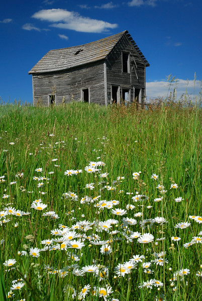 Homestead and Flowers