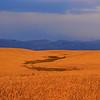 Amber waves of grain and purple mountains near Ashton, Idaho