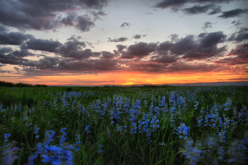 Untitled  <br /> <br /> About This Image:   In mid June the wild flowers are in full bloom outside of Ashton, Idaho.      <br /> <br /> Photographs Available:  See the drop down menu to the upper right for a list of print sizes and prices for this photo.