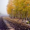 Fog on the Autumnal Equinox #3
