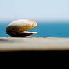 seashell ~ Southern Outer Banks
