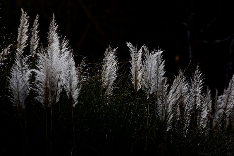 long, tall grass ~ Southern Outer Banks