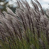 tall grass ~ Huron River and Watershed