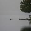 misty evening ~ Hancock Pond, Maine