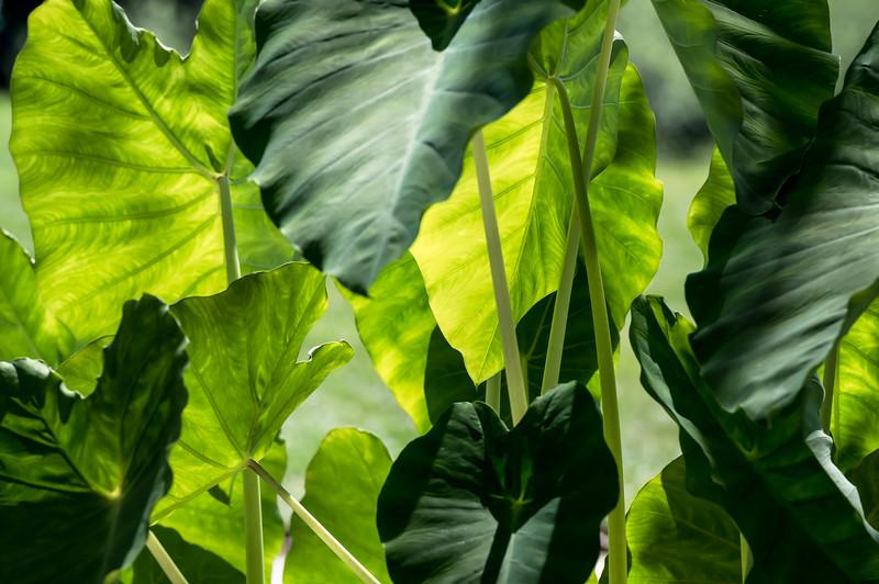 greenery ~ Eastern Seaboard